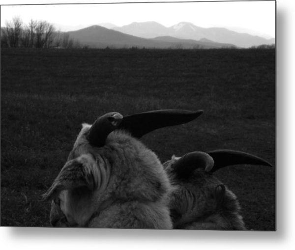 Horns And Hills Metal Print