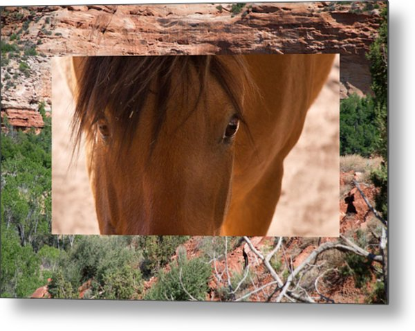 Horse And Canyon Metal Print