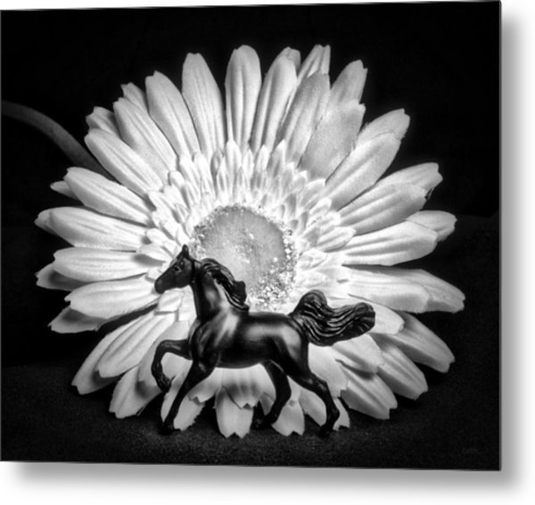 Horse And Daisy Metal Print