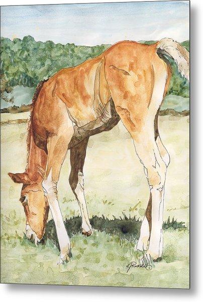 Horse Art Long-legged Colt Painting Equine Watercolor Ink Foal Rural Field Artist K. Joann Russell  Metal Print