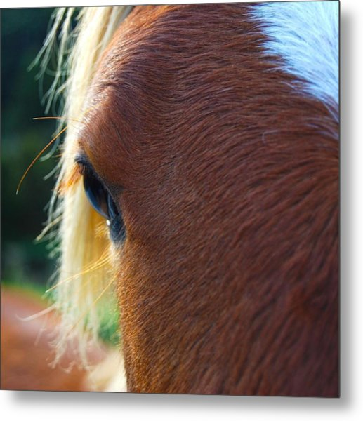 Metal Print featuring the photograph Horse Close Up by Jocelyn Friis
