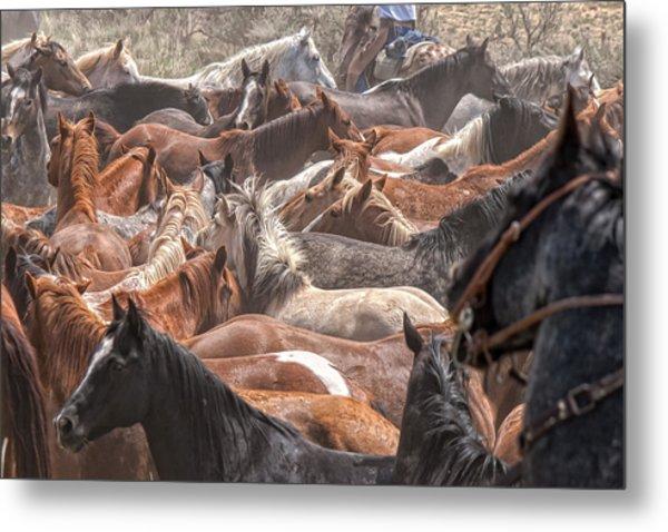 Horse Drive Chaos Metal Print