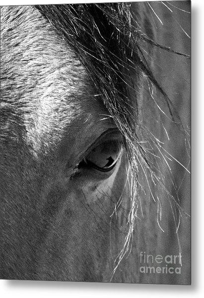 Horse Eye In Black And White Metal Print