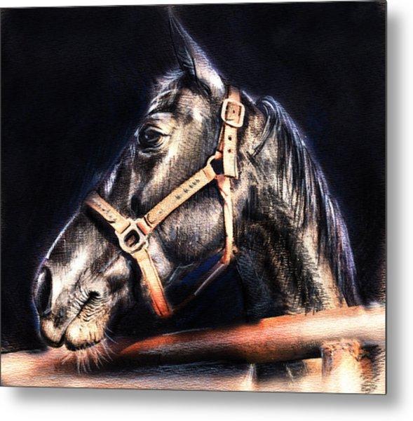 Horse Face - Pencil Drawing Metal Print