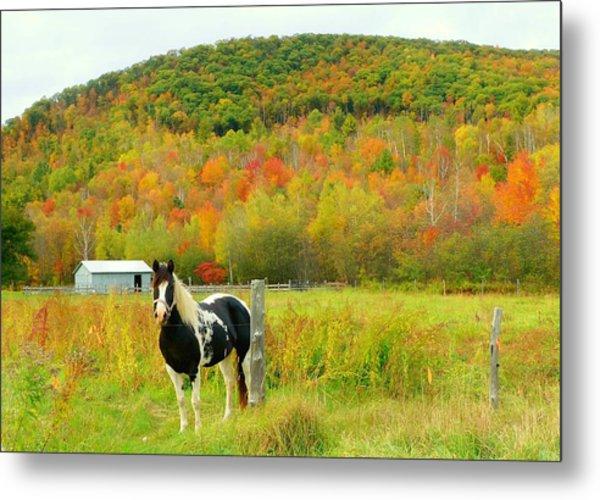 Horse In Autumn Field Metal Print