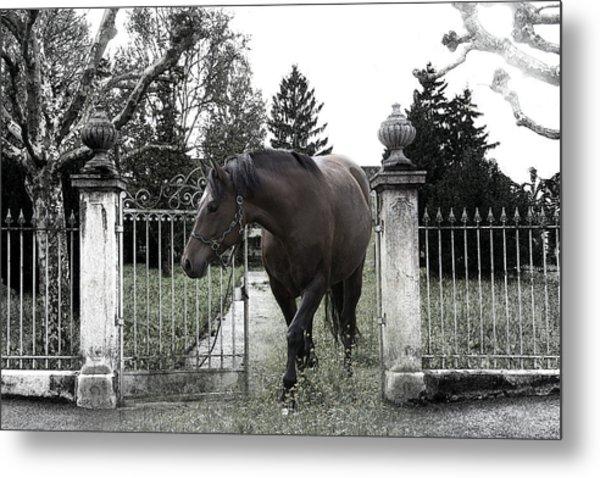 Horse In Europe Metal Print