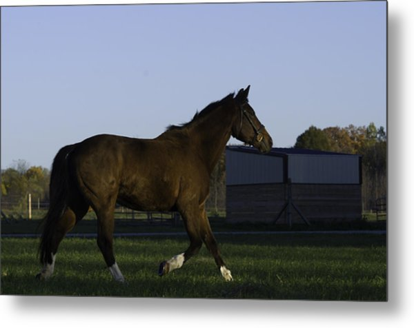 Horse In Field Metal Print by Jason Smith