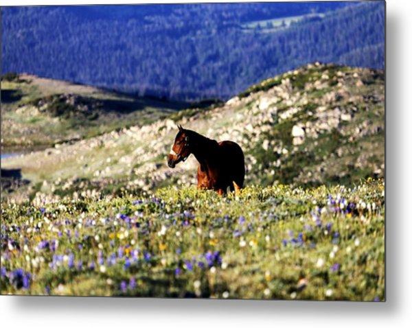 Horse In Mountain Wildflowers Metal Print by Rebecca Adams