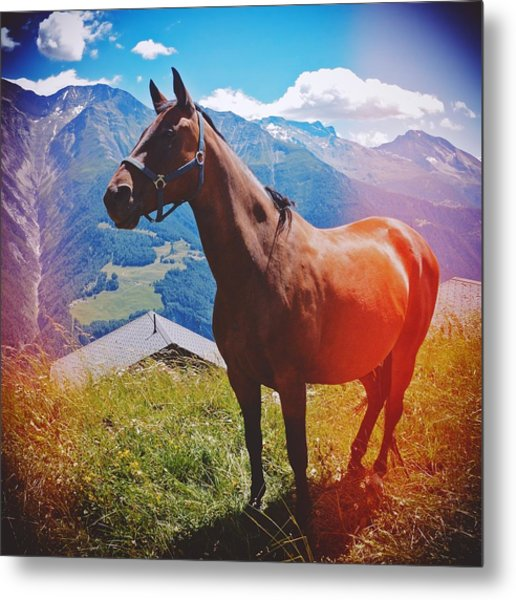 Horse In The Alps Metal Print