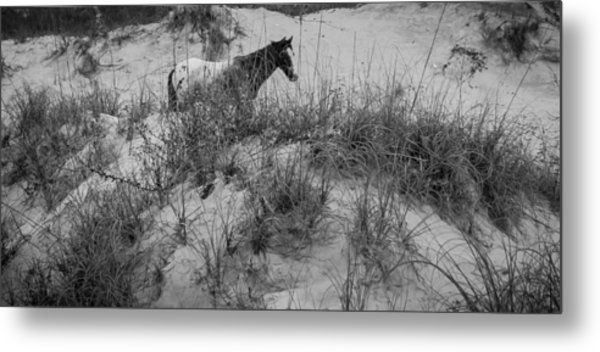 Horse In The Dunes Metal Print