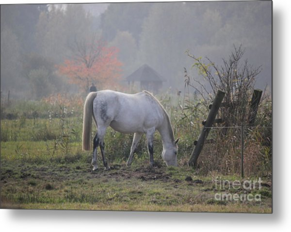 Horse On A Peaceful Day Metal Print
