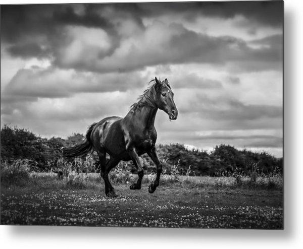 Horse Running In Field Metal Print by Rory Turnbull / Eyeem