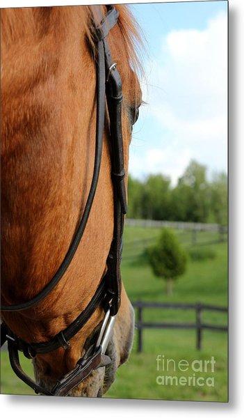 Horse View Metal Print