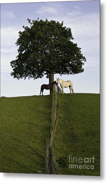 Horse Whisperers   Metal Print