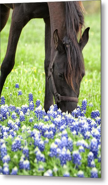 Horse With Bluebonnets Metal Print