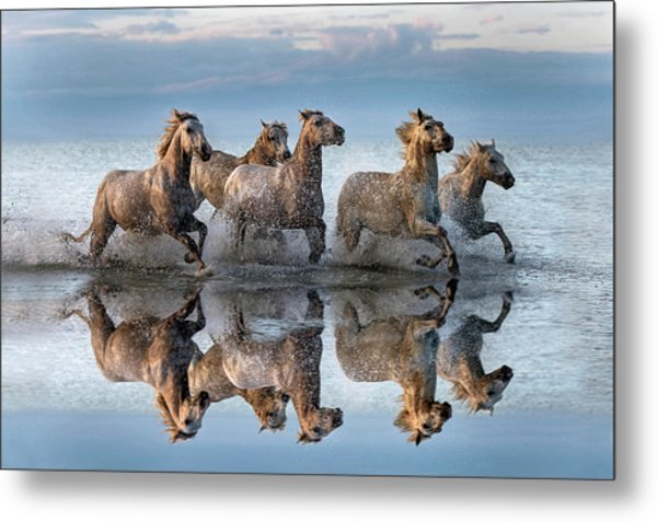 Horses And Reflection Metal Print by Xavier Ortega