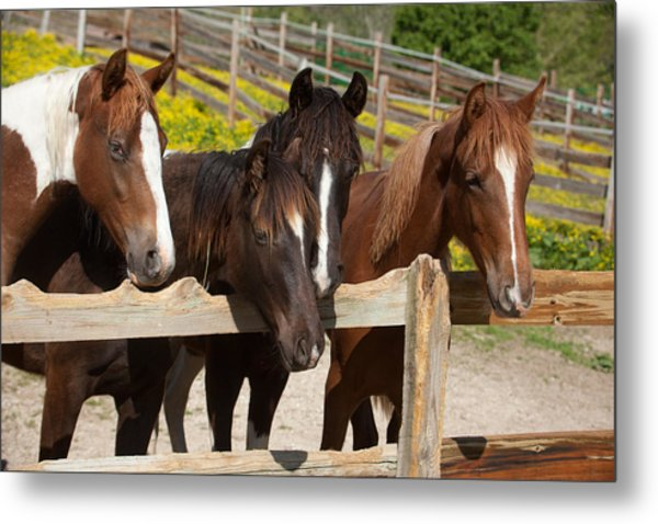 Horses Behind A Fence Metal Print