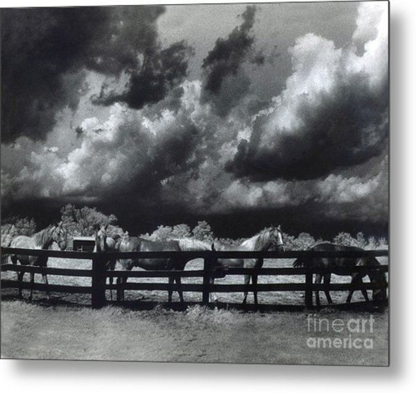 Horses Black And White Infrared Stormy Sky Nature ...