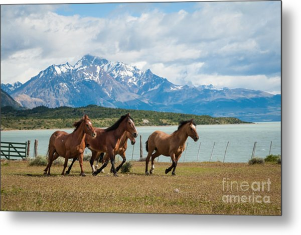 Horses Galloping In Patagonia Metal Print by OUAP Photography