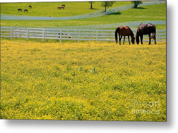 Horses Grazing In Field Metal Print