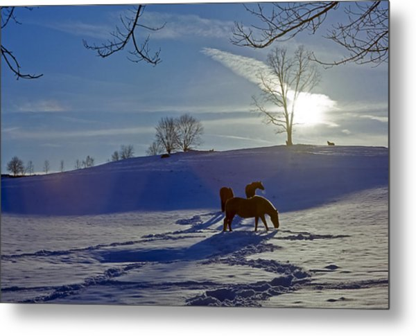 Horses In Snow Metal Print