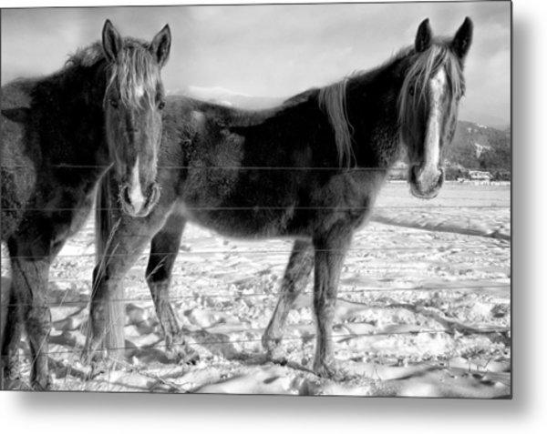Horses In Winter Coats Metal Print