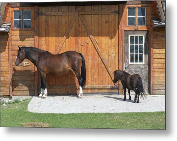 Horses On Rafter Six Ranch, Exshaw Metal Print