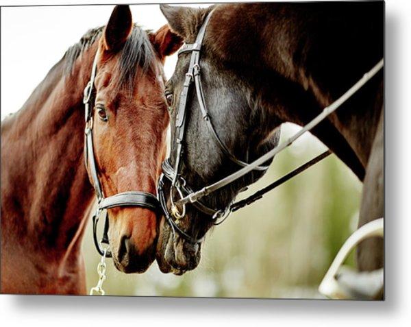 Horses Together Metal Print by Johner Images