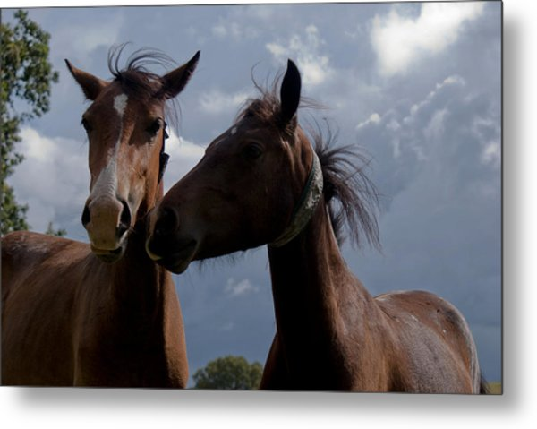 Horsing Around Metal Print
