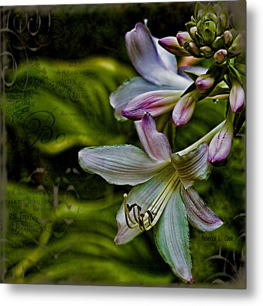 Hosta Lilies With Texture Metal Print