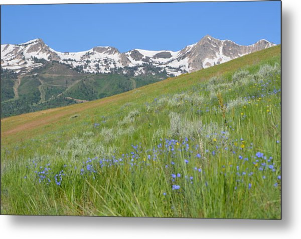Hot And Cold Metal Print by Amanda Powell