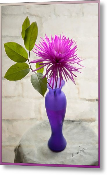 Hot Pink Spider Mum Metal Print