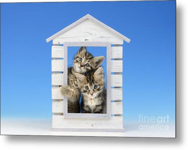 House Of Kittens Ck528 Metal Print