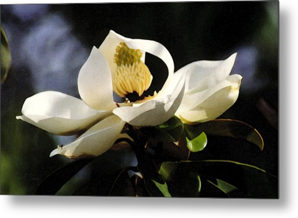 Houston Magnolia Metal Print