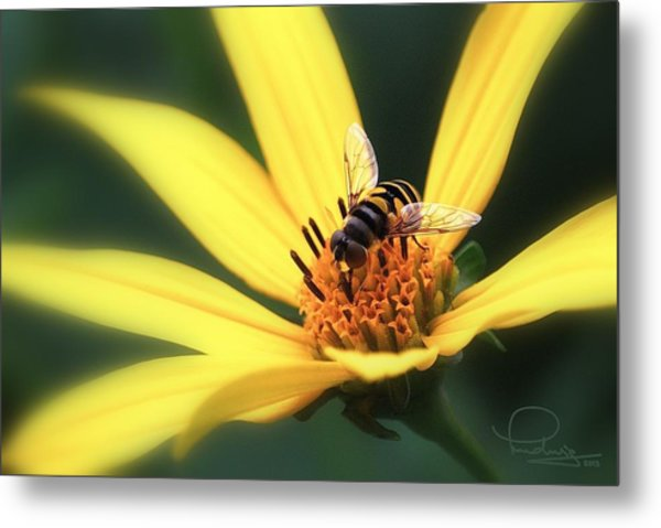 Hover Fly On Flower Metal Print