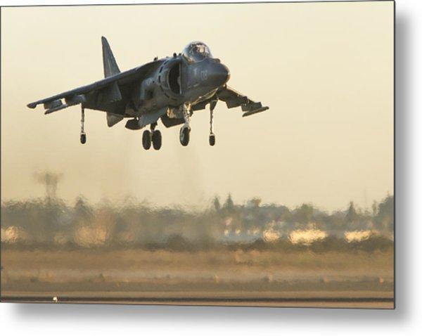 Hovering Harrier Metal Print