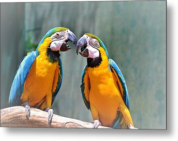 How About A Little Kiss Metal Print