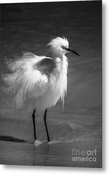 How Do I Look- Bw Metal Print