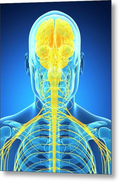 Human Brain And Nervous System Metal Print
