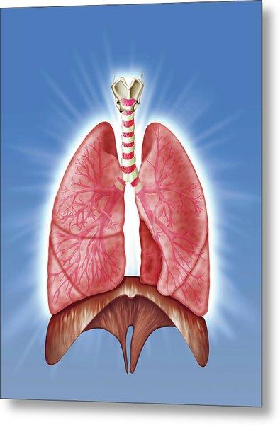 Human Respiratory System Metal Print by Harvinder Singh
