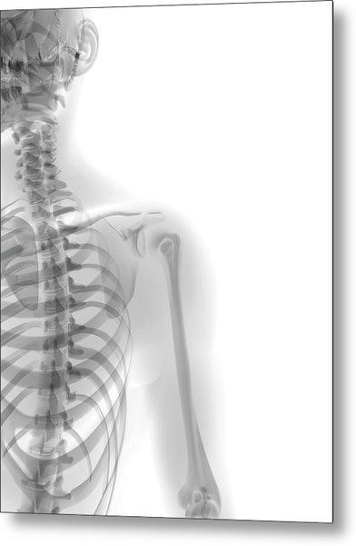Human Skeleton Metal Print