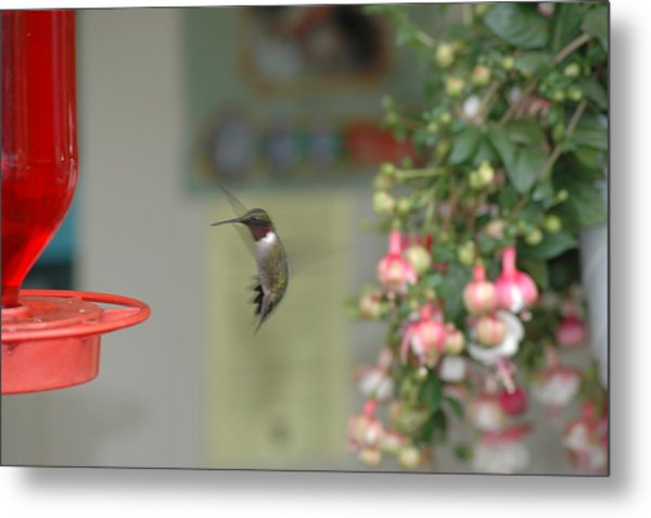 Metal Print featuring the photograph Hummer by David Armstrong
