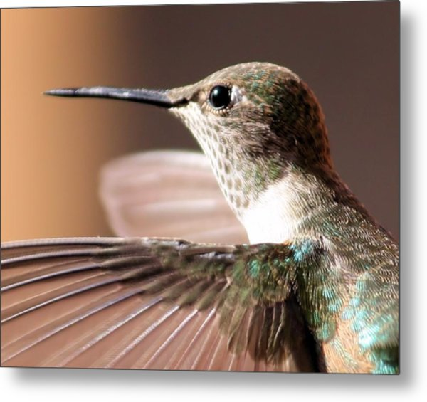 Hummer On The Wing Metal Print