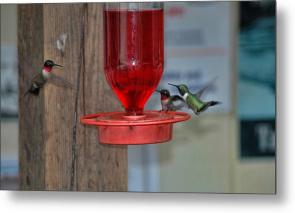 Metal Print featuring the photograph Hummers by David Armstrong