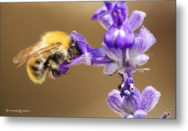 Humming Bee  Metal Print