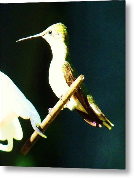 Humming Bird Smiling Metal Print