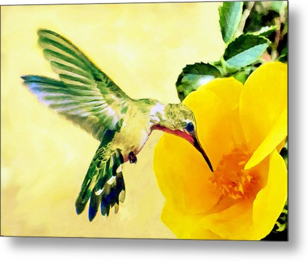 Hummingbird And California Poppy Metal Print