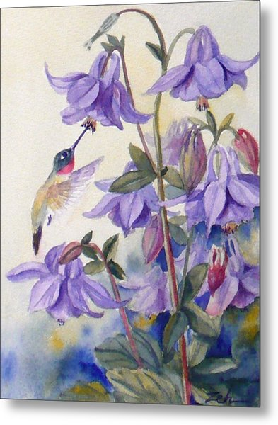 Hummingbird And Purple Columbine Metal Print