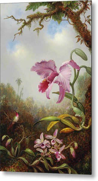 Hummingbird And Two Types Of Orchids Metal Print