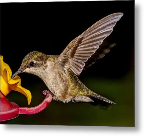 Ruby Throated Hummingbird Metal Print